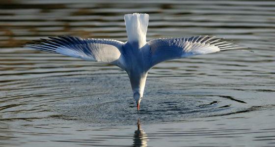 преузето са www.facebook.com/Birds.Lovers