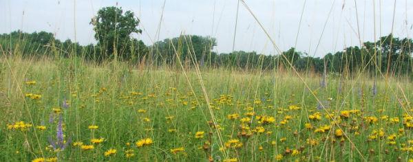 Према истраживањима 50 - 70 000 врста биљака се користи у традиционалној или савременој медицини