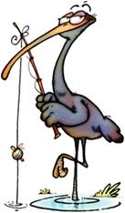 Ibis peca