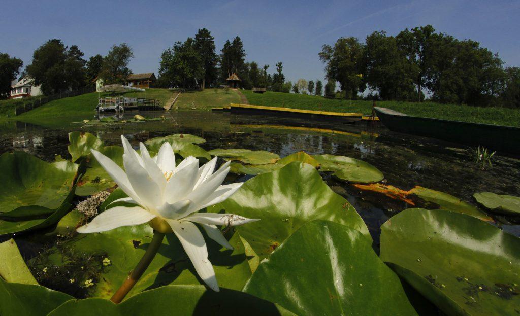 Novi Sad 13.08.2014 - Obedska bara se nalazi u aluvijalnoj ravni reke Save u južnom Sremu. Ovaj poznati rezervat prirode nalazi se i u neposrednoj blizini Beograda. Predstavlja najveće poplavno područje u Srbiji. Obedska bara jedno je od najstarijih zaštićenih prirodnih dobara u svetu, a prva administrativna zaštita datira još iz 1874.